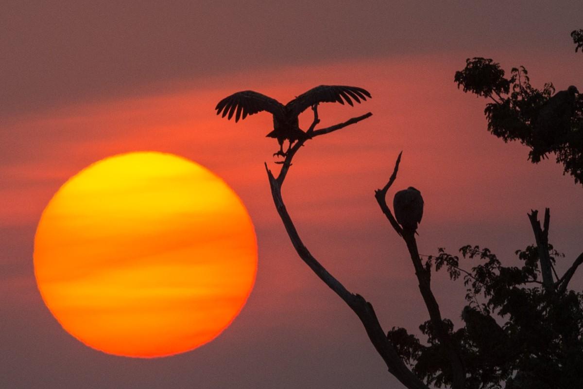 Geier bei Sonnenuntergangin der Masai Mara