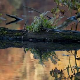 Schwimmende-Insel_Jupp Beppel