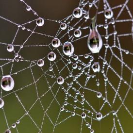 Spinnennetz-im-Morgentau_Friedhelm Vinken
