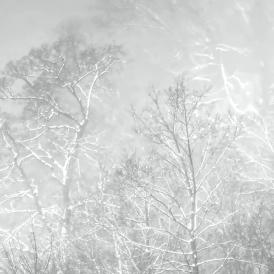Winterwald_Rudolf Müller