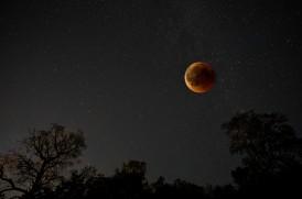 November 18 - Stefan Wendling - Blut-Mond