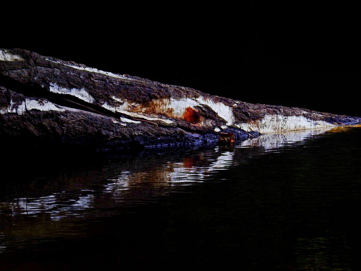 """August 20, """"Krokodil ?"""", Jürgen Kopp"""