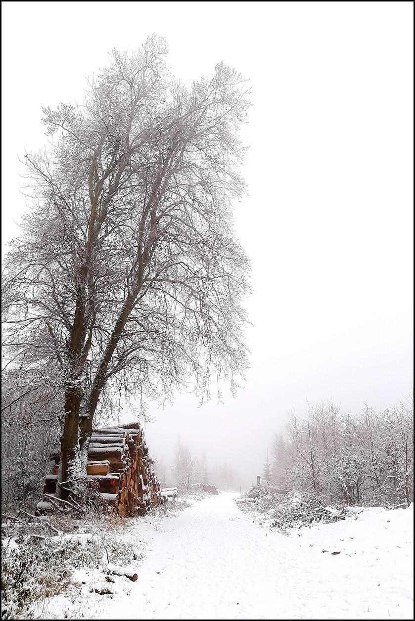 "Dezember 20, ""Winterstimmung am Hohen Gras"", von Herbert Schmidt"