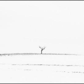 """""""Der alte Baum""""- , von Jürgen Willand Canon EOS 6 D II - 1/100s - f/8 - ISO 100 - 70mm"""