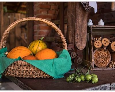 BLICKPUNKTE 9 - Gemüse