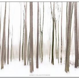 """""""Märchenwald""""- , von Jürgen Willand Canon EOS 6 D II - 0,5s - f/10 - ISO 100 - 28 mmmm"""